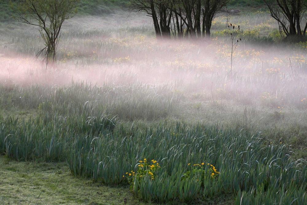 Riviereiland De Bol flora Levende Rivier
