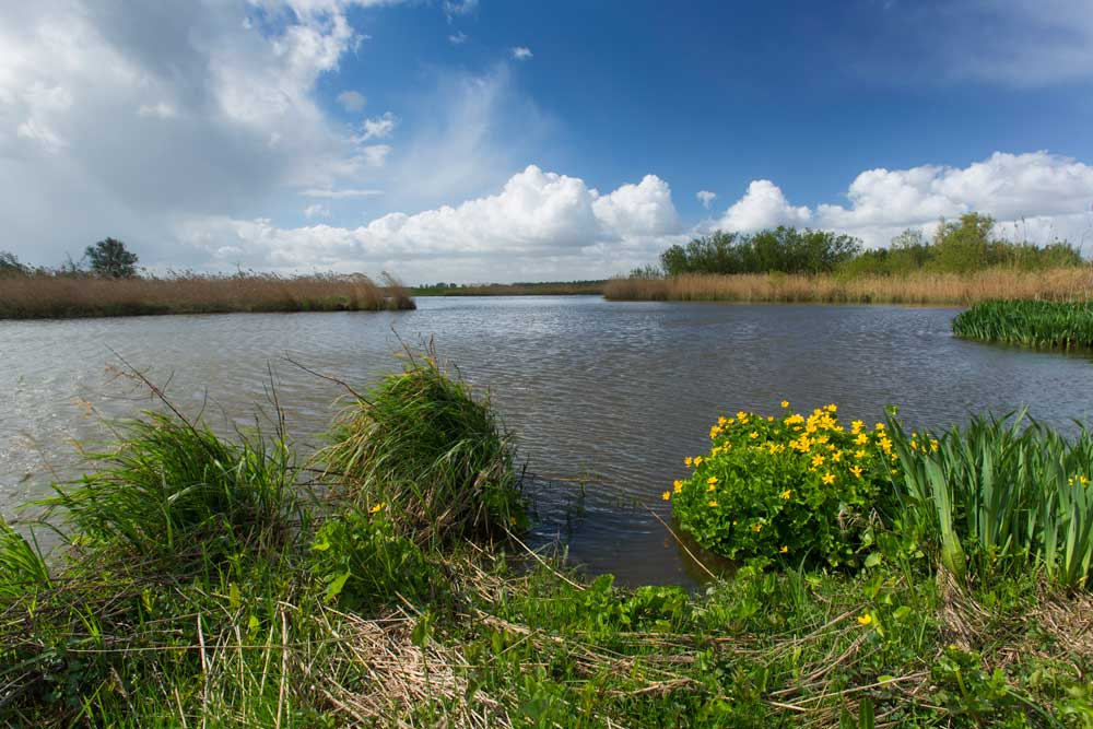 Riviereiland De Bol kano Levende Rivier