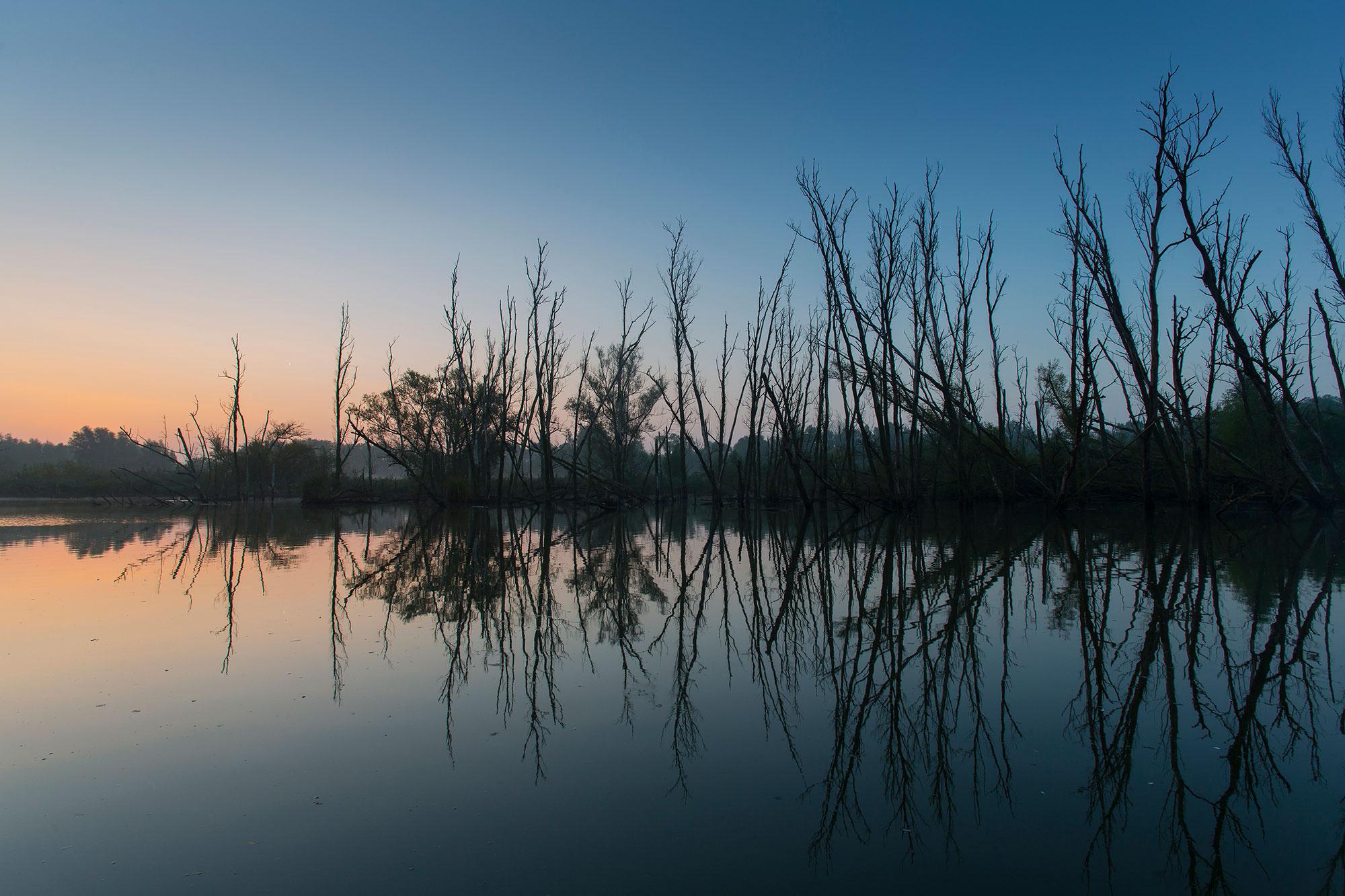 De Rijnstrangen