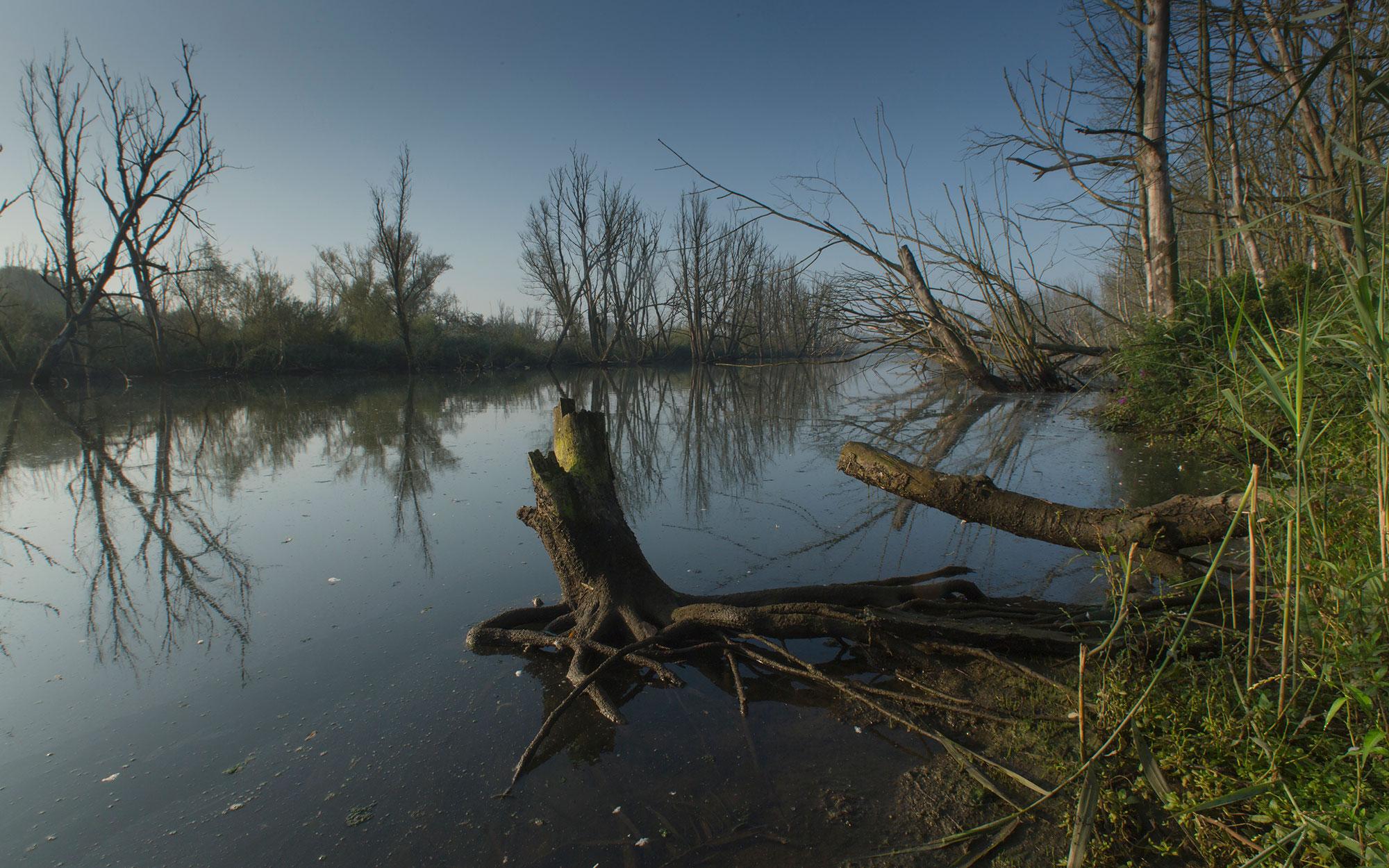 Biesbosch Noordwaard - Levende Rivier