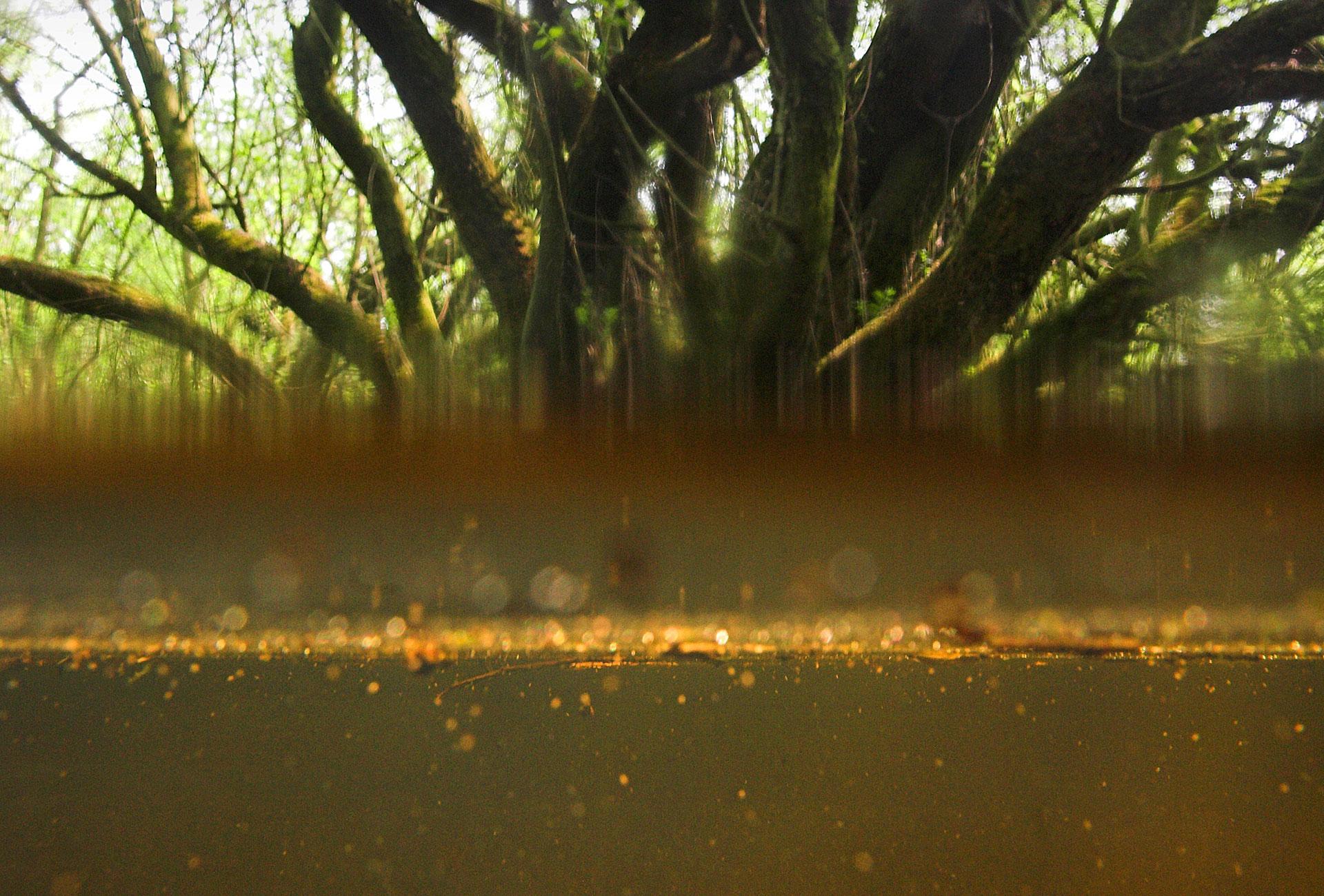 Dode Bomen Wageningen - Levende Rivier